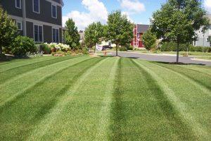 lawn maintenance NY